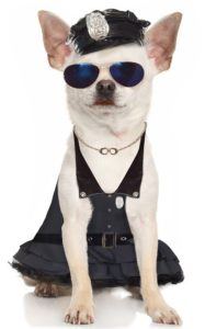 pretty-officer-chihuahua-pet-costume