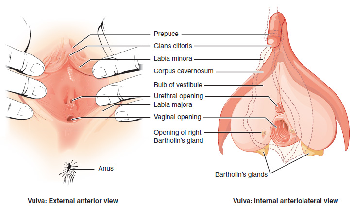 vagina-blog-1