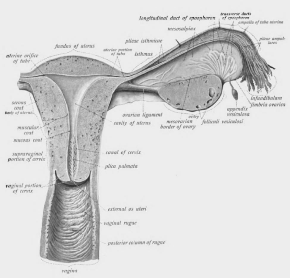 vagina-blog-4