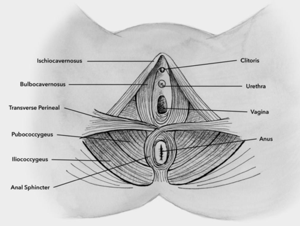 vagina-blog-5