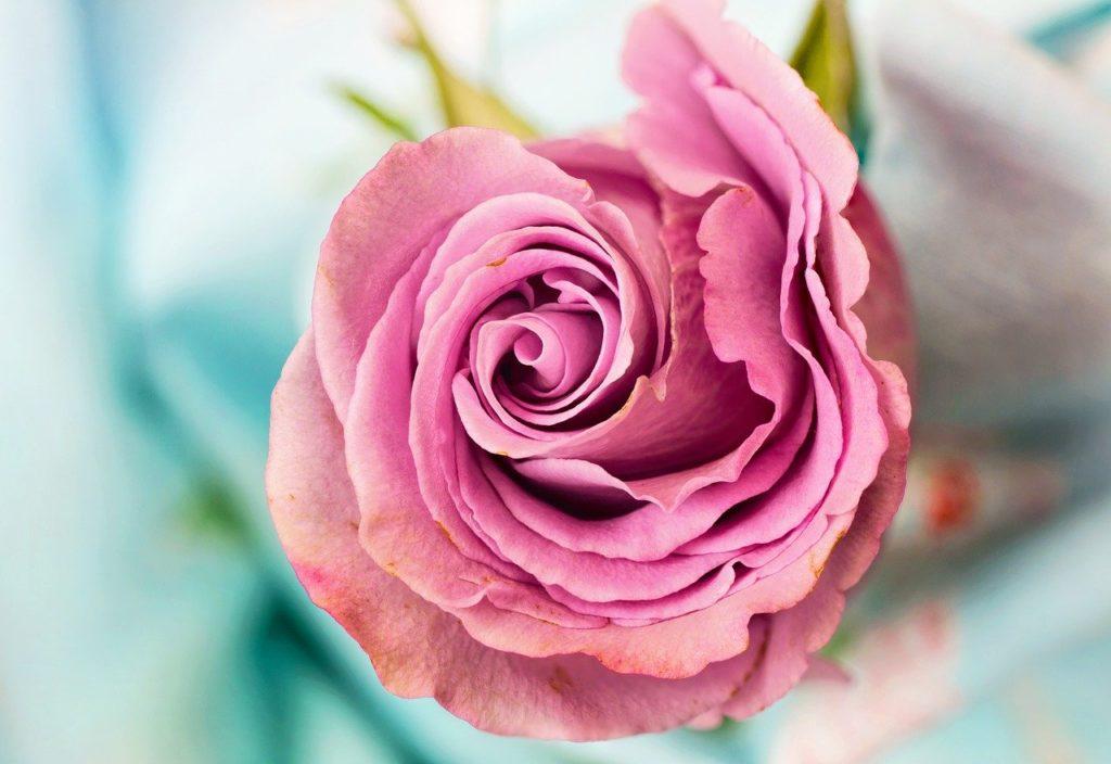 flower gspot